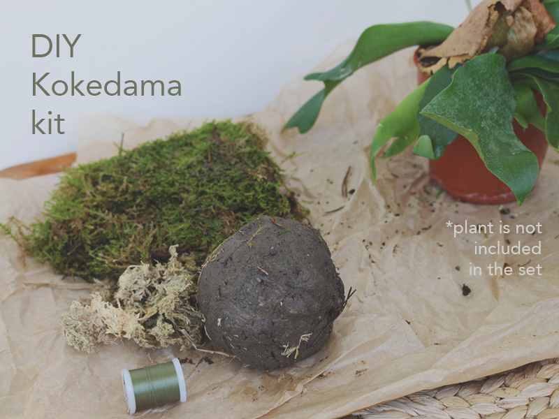 Kokedama DIY kit